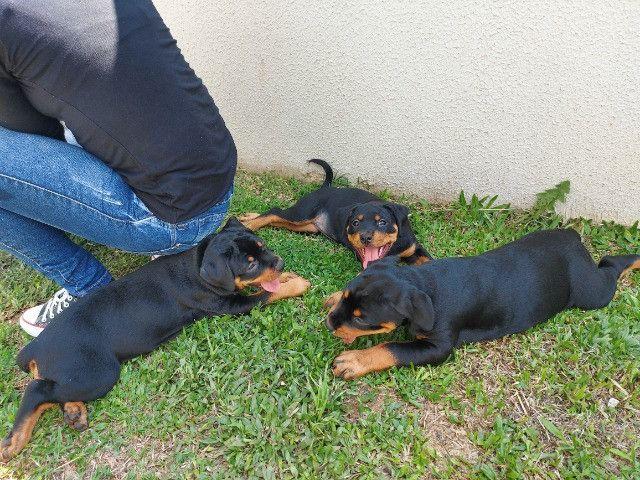 Vende-se lindas filhotes fêmeas de Rottweiler com 2 meses - Foto 5