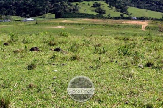 Terreno as margens da BR 282 em Bom Retiro - Foto 3