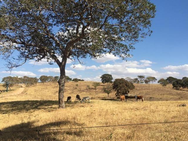 Fazenda 25 Alqueires. Município de Pontalina-GO - Foto 18