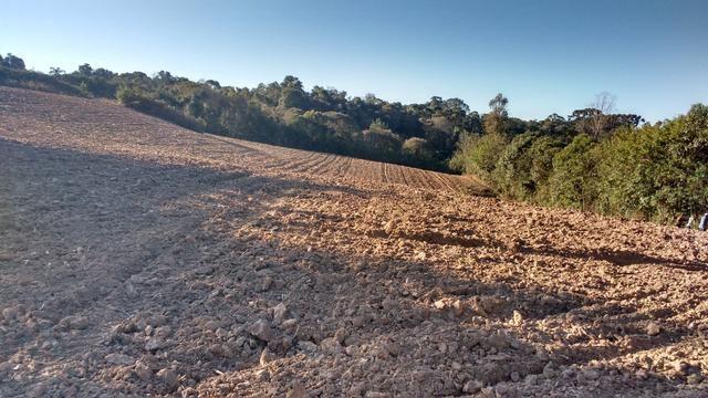 Terreno/Área Industrial com 32.550m² em Araucária - Foto 3