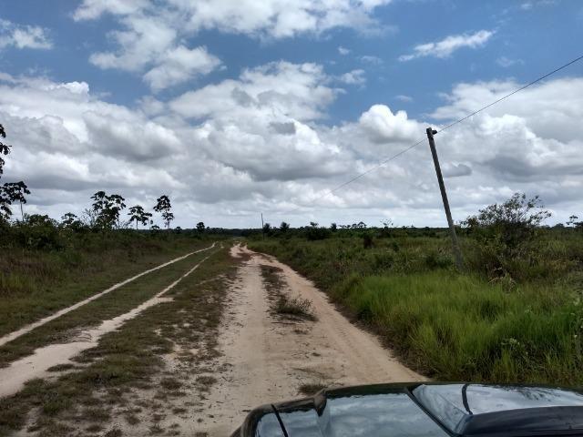 No Pará,175 hectares ha região de Castanhal-Pará por 1.400.000,00 documentada - Foto 11