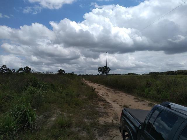 No Pará,175 hectares ha região de Castanhal-Pará por 1.400.000,00 documentada - Foto 3