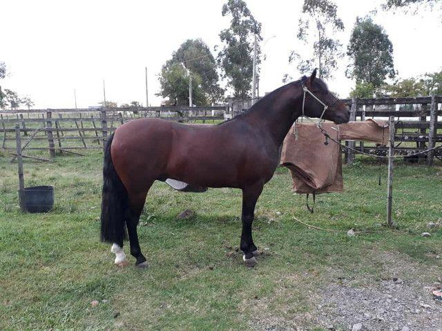 Cavalo cuiudo - Foto 2