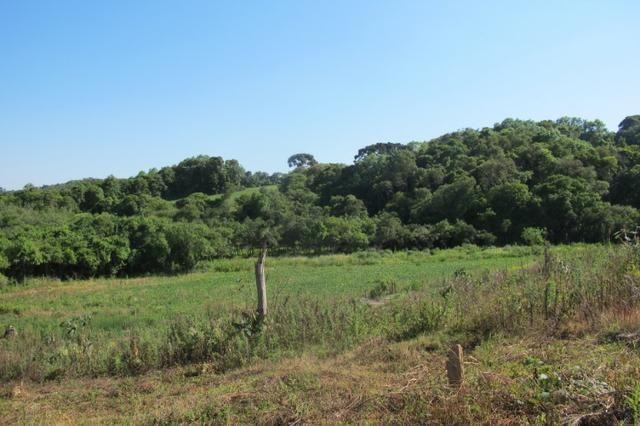 Área imperdível R$100.000,00 o alq. de planta/R$50.000,00 bosque e rio - Foto 2