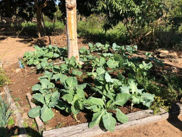 Vendo Fazenda Porteira fechada 80 hectares/DOCUMENTADA - Foto 7