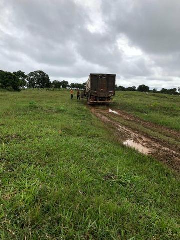 Vendo Fazenda Porteira fechada 80 hectares/DOCUMENTADA - Foto 4