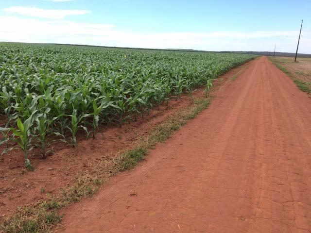 1900 Hectares, 1800 hectares lavoura, lavoura soja e algodão, Diamantino ?MT - Foto 2