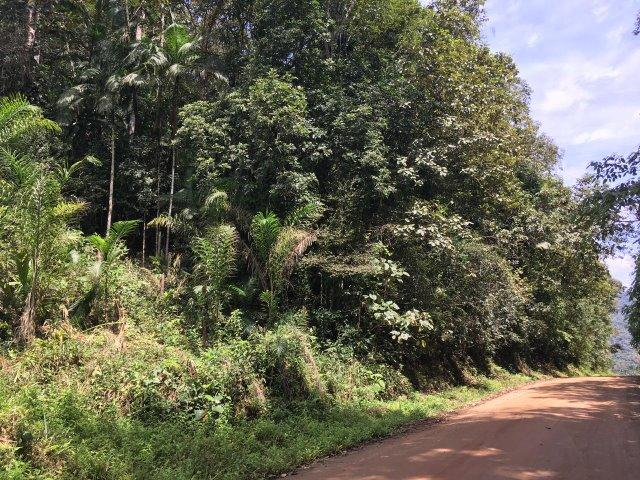 Chácara Em Guaramirim No Serenata - Foto 9
