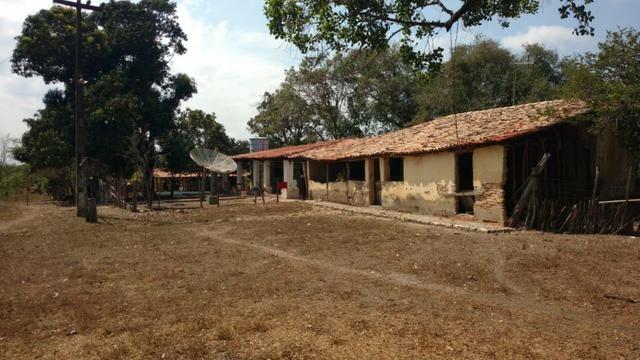 Fazenda em José de Freitas-PI - Foto 2