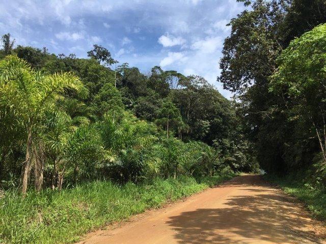 Chácara Em Guaramirim No Serenata - Foto 3