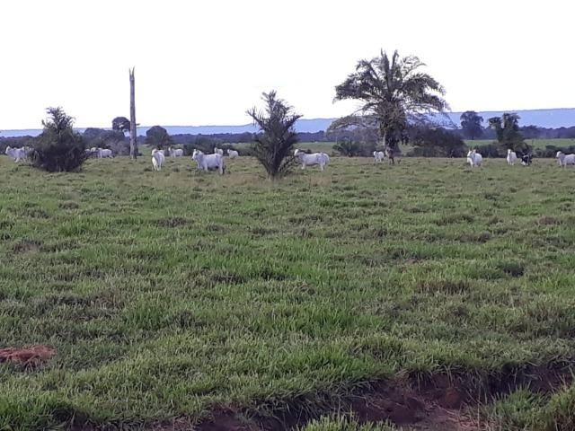 Fazenda em Arenapolis Mato Grasso Terra de Cultura - Foto 10