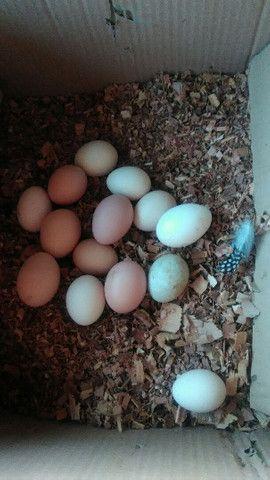 Ovos caipiras para consumo - Foto 5