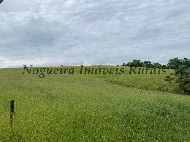 Fazenda com 59 alqueires para pecuária (Nogueira Imóveis Rurais) - Foto 9