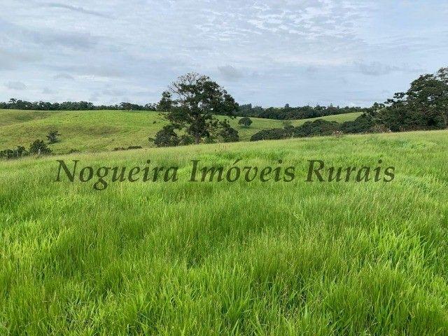 Fazenda com 59 alqueires para pecuária (Nogueira Imóveis Rurais) - Foto 20