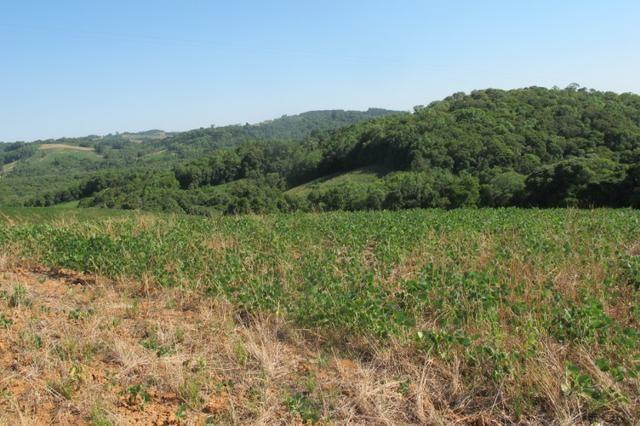 Área imperdível R$100.000,00 o alq. de planta/R$50.000,00 bosque e rio - Foto 15