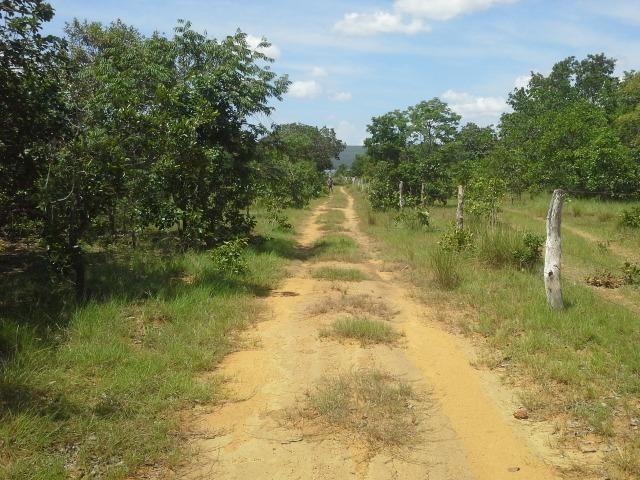 Excelente Área de 51 mil m² C/ 70 metros Beira Lago Km 29 Estrada Lajeado - Foto 9