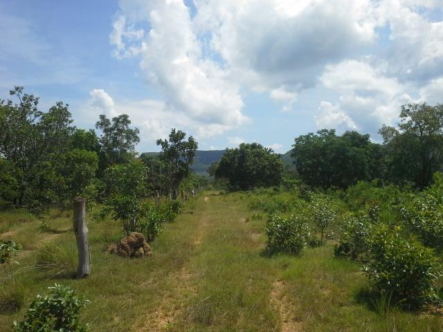 Excelente Área de 51 mil m² C/ 70 metros Beira Lago Km 29 Estrada Lajeado - Foto 8