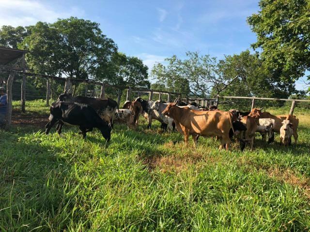 Vendo Fazenda Porteira fechada 80 hectares/DOCUMENTADA