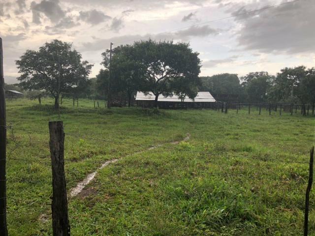 Vendo Fazenda Porteira fechada 80 hectares/DOCUMENTADA - Foto 12