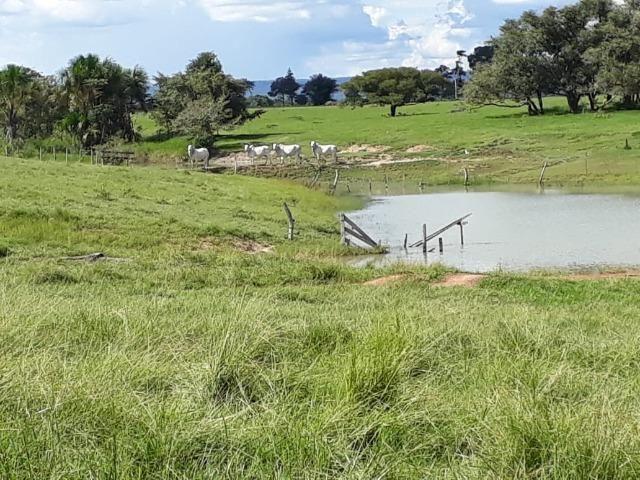 Fazenda em Arenapolis Mato Grasso Terra de Cultura - Foto 3