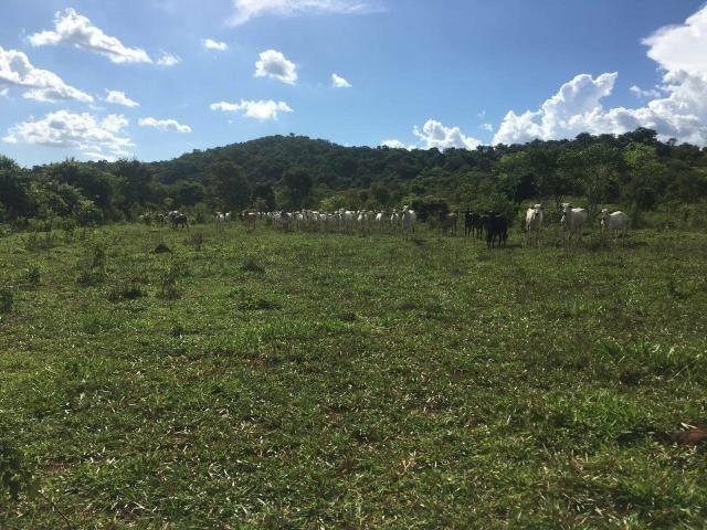 Fazenda Cesarina - Foto 2
