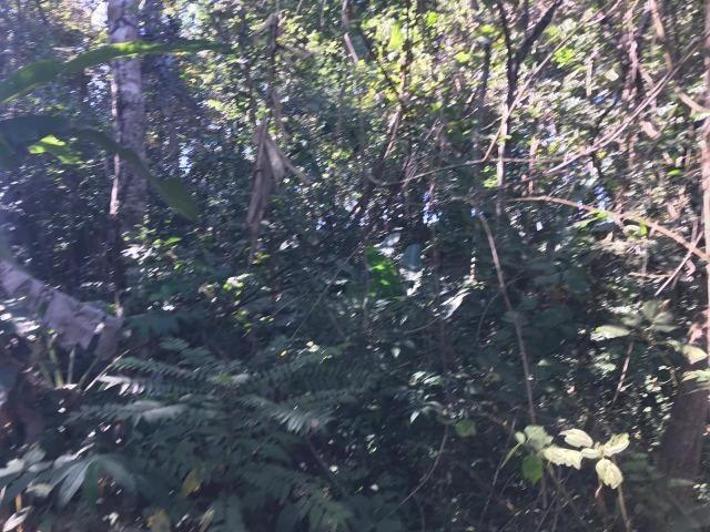 Chácaras com Córrego em Caldas Novas - Foto 14