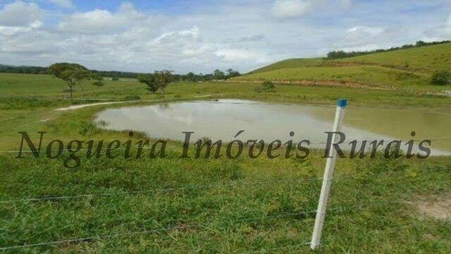 Fazenda com 450 alqueires em Juquiá, oportunidade para pecuária (Nogueira Imóveis Rurais) - Foto 9