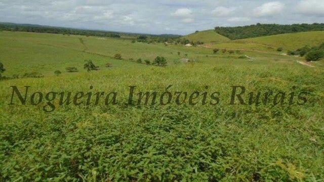 Fazenda com 450 alqueires em Juquiá, oportunidade para pecuária (Nogueira Imóveis Rurais) - Foto 6