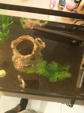Casinha para peixe  - Foto 2