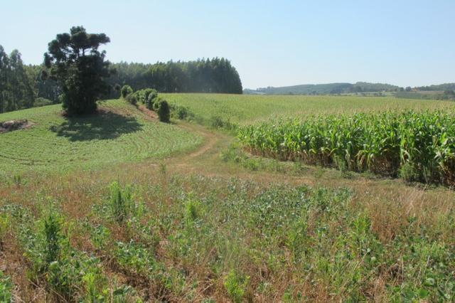 Área imperdível R$100.000,00 o alq. de planta/R$50.000,00 bosque e rio - Foto 6