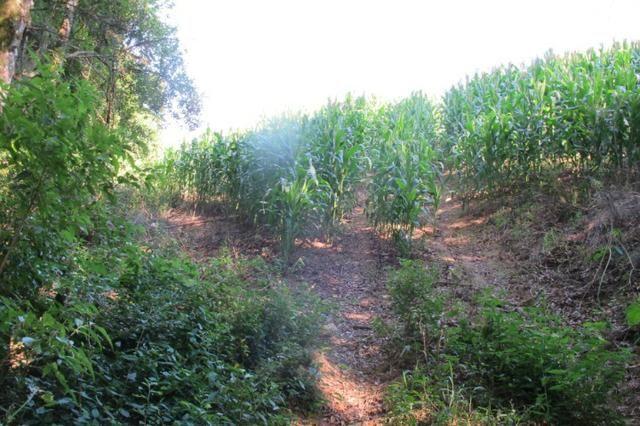 Área imperdível R$100.000,00 o alq. de planta/R$50.000,00 bosque e rio - Foto 10