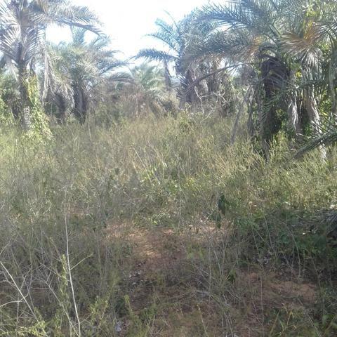 Fazenda em Itaberaba, 78 tarefas, 344 mil metros2 - Foto 3