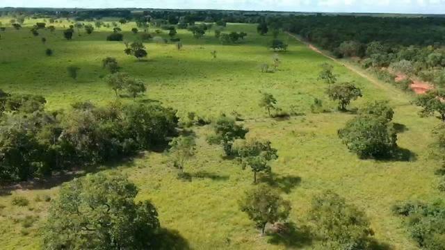 Fazenda em Livramento há 44 km Cuiabá com piscina, muito pasto, represas e lago - Foto 8