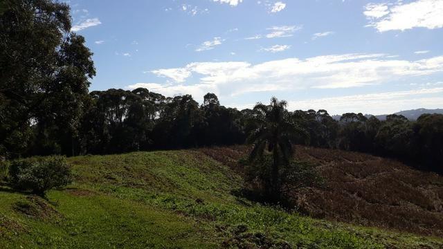 Excelente área rural medindo 70.153 m2, São José dos Pinhais - Roça Velha - Foto 7
