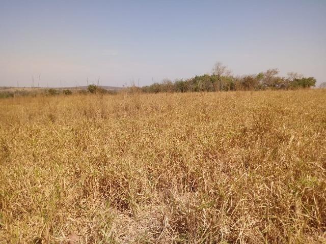Fazenda em Livramento há 44 km Cuiabá com piscina, muito pasto, represas e lago - Foto 20
