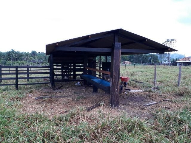3.82 hectares a 12 km de Castanhal por 220 mil reais Documentada - Foto 4