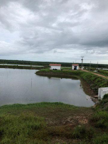 FZ00- Vendo Fazenda Camarão Itapipoca Ceara  - Foto 9