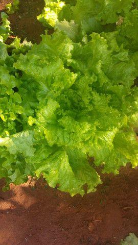 Promoções de verduras todos os pacotes 1,50$ - Foto 2
