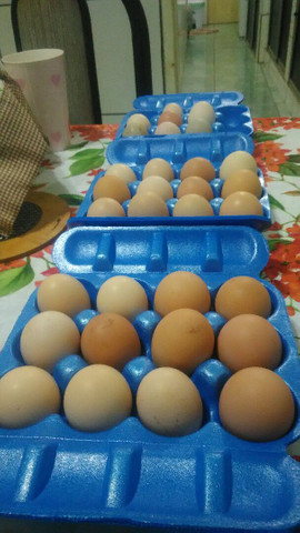 Ovos caipiras para consumo - Foto 4
