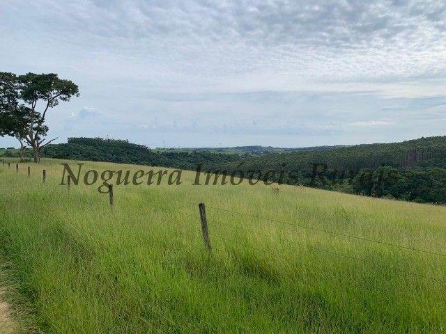 Fazenda com 59 alqueires para pecuária (Nogueira Imóveis Rurais) - Foto 4