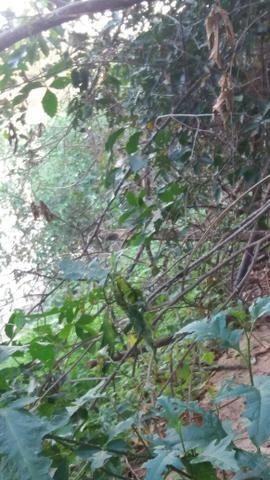 Chácara de 2 hectares em barão de melgaço, nas margem do rio! - Foto 8