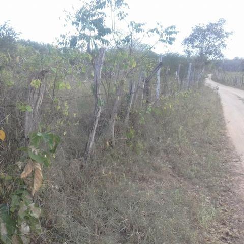 Fazenda em Itaberaba, 78 tarefas, 344 mil metros2 - Foto 4