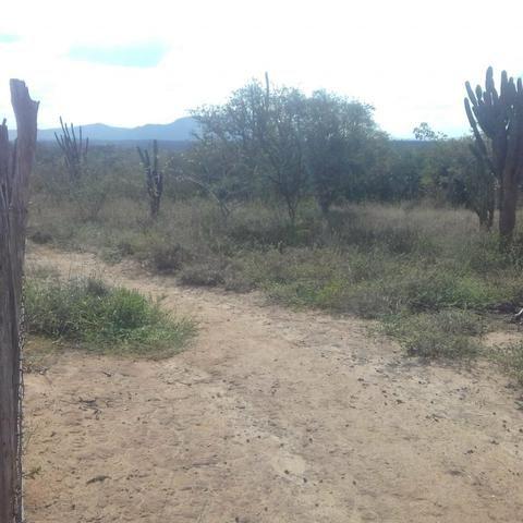 Fazenda em Itaberaba, 78 tarefas, 344 mil metros2 - Foto 9