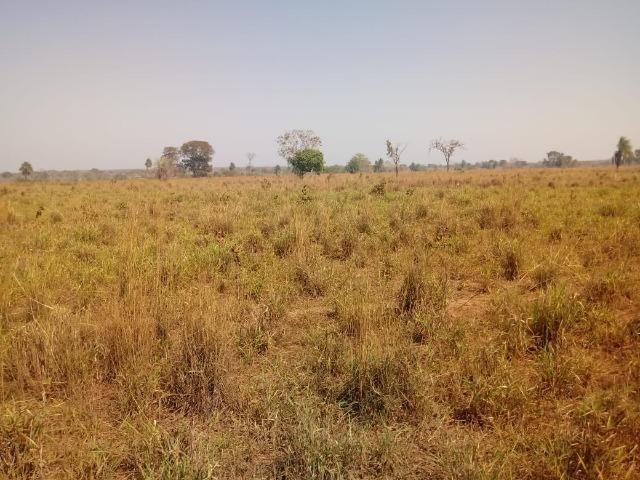 Fazenda em Livramento há 44 km Cuiabá com piscina, muito pasto, represas e lago - Foto 17