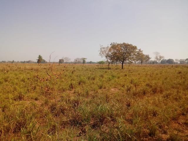 Fazenda em Livramento há 44 km Cuiabá com piscina, muito pasto, represas e lago - Foto 15