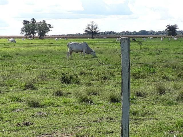 Fazenda em Arenapolis Mato Grasso Terra de Cultura - Foto 14