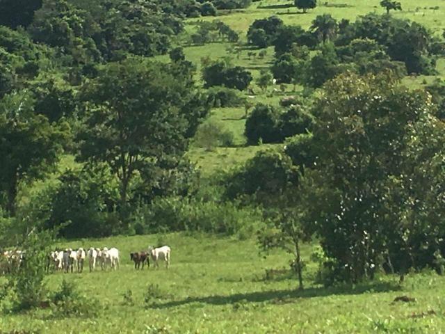 Fazenda Cesarina - Foto 8