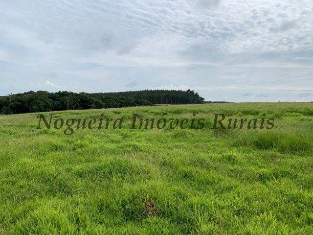 Fazenda com 59 alqueires para pecuária (Nogueira Imóveis Rurais) - Foto 16
