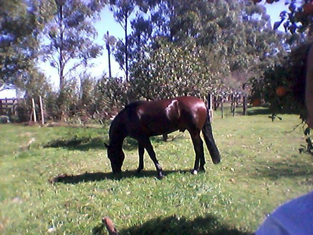 Cavalo cuiudo - Foto 3