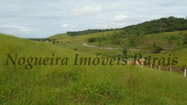 Fazenda com 450 alqueires em Juquiá, oportunidade para pecuária (Nogueira Imóveis Rurais) - Foto 7